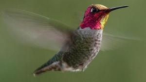 colibri--644x362